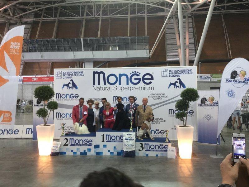 Expocani Calendario.85 Esposizione Internazionale Canina 2018 Lingotto Fiere